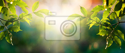 Image fresh green leaves in spring and bokeh background