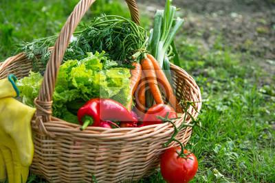 Fresh organic vegetables in wicker basket in the garden, natural growing veggies