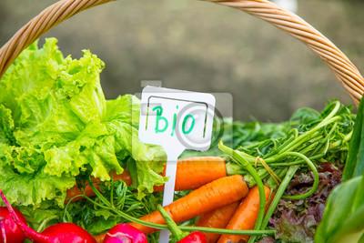 Fresh organic vegetables in wicker basket with BIO label, natural growing veggies