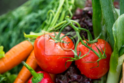 Fresh organic vegetables with tomatoes closeup, natural growing vegetables