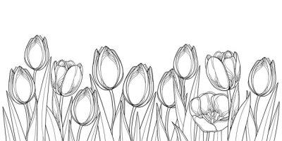 Image Frontière horizontale de vecteur avec fleurs de tulipe de contour, bourgeon et feuilles fleuries en noir isolé sur fond blanc. Tulipes Contour pour accueillir la conception de printemps ou livre de co
