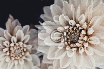 Fleurs Blanches Hiver Fabulous Chapeau Odle Rose Fleurs Dhiver