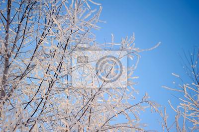 Image Frost Sur Les Arbres Rime Sur Les Branches En Hiver Nature