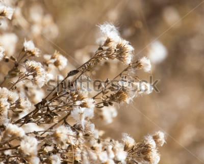 Image Fuzz sur la plante en plein air en automne