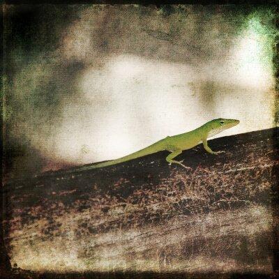 Image Gecko Green Cameleon Lizard sur Brown Wood Branch