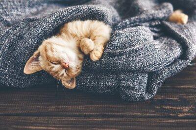 Image Gigner chaton dormir