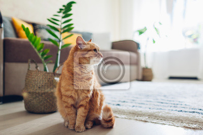 Image Ginger cat sitting on floor in cozy living room. Interior decor