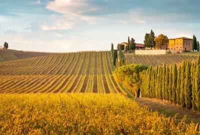 Image Golden vineyards in autumn at sunset, Chianti Region, Tuscany, Italy