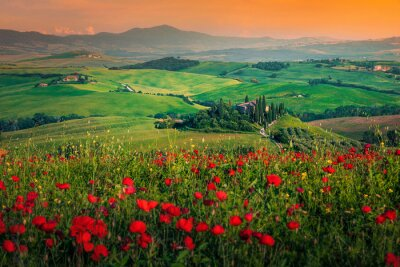 Image Grain fields with red poppies at sunset in Tuscany, Italy