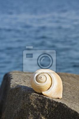 grande conque sur un rocher près de la mer