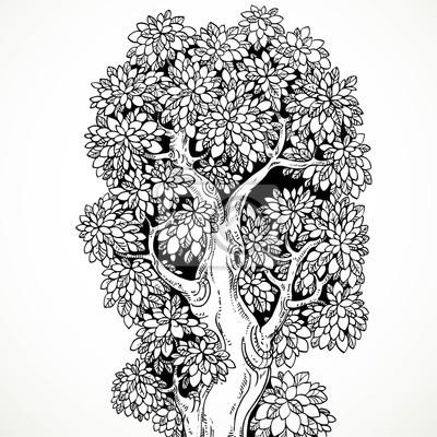 Image Graphique Dessin Noir Encre Grand Vieux Arbre Isolé Blanc