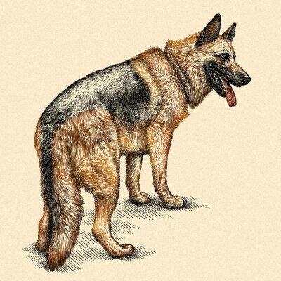 Image Graver, chien, Illustration