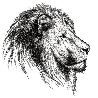 Image Gravure lion illustration