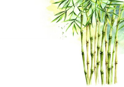 Image Green bamboo background, stems and leaves, Asian rainforest. Watercolor hand drawn  isolated illustration