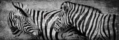 Image Gros plan, zèbras, pâturage, sec, pré