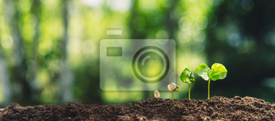 Image Growth Trees concept Coffee bean seedlings nature background Beautiful green
