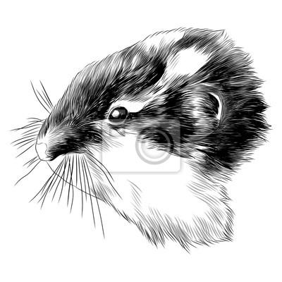 Hamster noir chatte