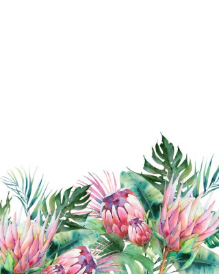 Image Hand drawn greeting card design with exotic leaves and protea flowers isolated on white background. Palm tree, banana leaves, mostera plants