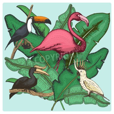 Image hand drawn vector realistic bird, sketch graphic style, set of domestic. cockatoo parrot and rhinoceros hornbill, toco toucan and flamingo