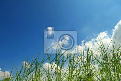 Herbe, bleu, ciel