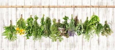 Image Herbes medicinales. Apothicaire à base de plantes. Lavande, pissenlit, ortie