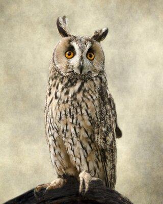 Image Hibou Longue, Textures ajoutées pour faire ressortir la beauté du hibou.