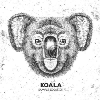 Hidden Animal Koala Dessin A La Main Muzzle Of Koala Peintures