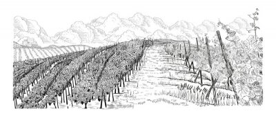 Image Hill of vineyard landscape with city, clouds on horizont hand drawn sketch vector illustration isolated on white