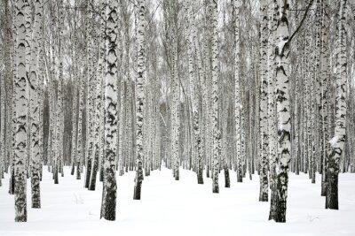 Image Hiver forêt de bouleau