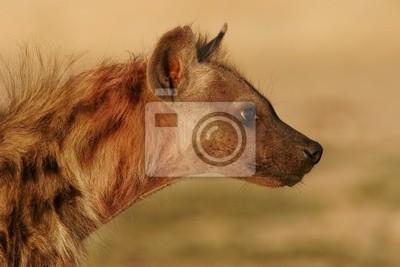 hyène portrait