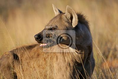 Hyène tachetée portrait