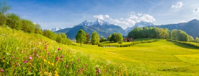 Image Idyllic mountain scenery in the Alps with blooming meadows in springtime
