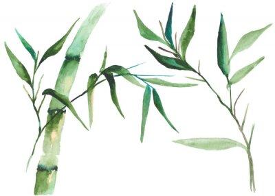 Image Illustration aquarelle en bambou