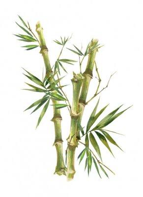 Image Illustration aquarelle peinture de feuilles de bambou, sur fond blanc