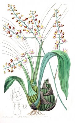 Image Illustration de plante