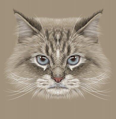 Image Illustration du chat sibérien. Mignon Point de couleur domestique Chat aux yeux bleus.