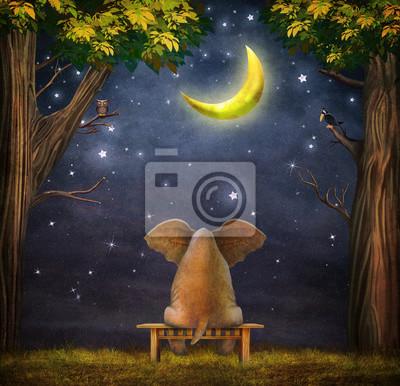 Illustration, éléphant, banc, nuit, forêt
