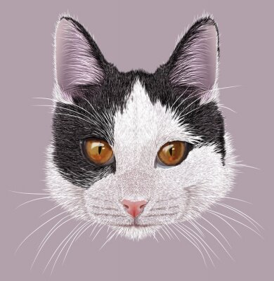 Image Illustration Portrait de chat domestique. Mignon petit chat bicolore aux yeux orangés.