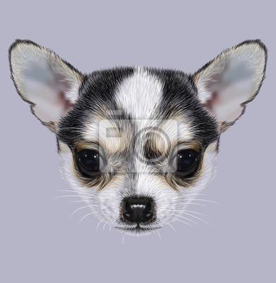 illustrative portrait de chiot chihuahua petit chien bicolore peintures murales tableaux. Black Bedroom Furniture Sets. Home Design Ideas