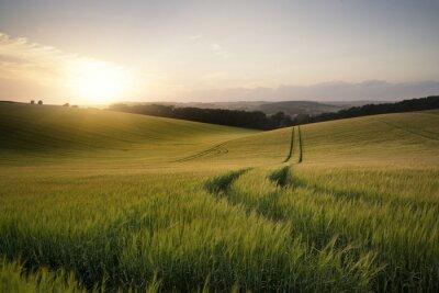 Image image Été paysage du champ de blé au coucher du soleil avec de belles l