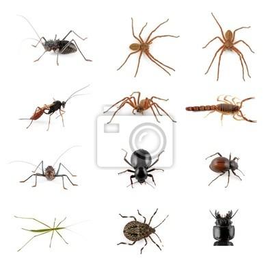 Insectes, araignées et la collecte de scorpion sur fond blanc