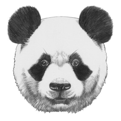 Image Isolé sur fond blanc