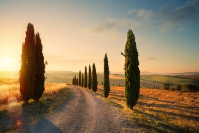 Image italy tuscany countryside rolling hills; summer farmland and country road;