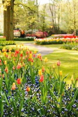 Image Jardin de printemps