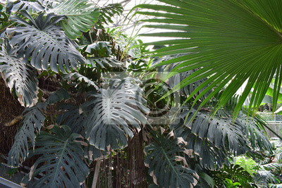 image jardin des plantes de lille - Jardin Des Plantes Lille