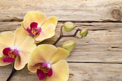 Image Jaune orchidées.