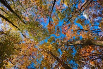 Image Jesienne Korony drzew