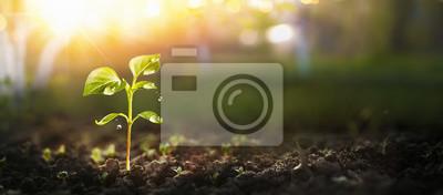 Image Jeune plante au soleil, plante en croissance, plant de plante