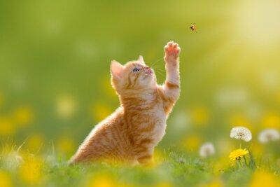 Image Junge Katze/Kätzchen jagd einen Marienkäfer