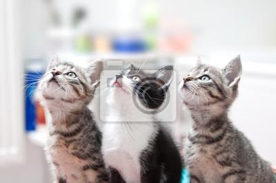 junge katzen gucken neugierig